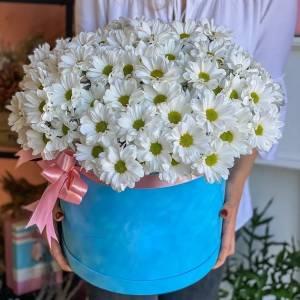 Коробка 51 ветка ромашковой хризантемы R1791