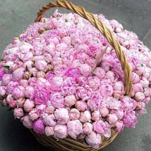 501 розовый пион в корзине R955